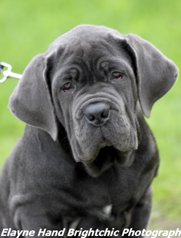 Dog Training Classes Palmerston North
