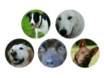 Dog Training Classes: Woodville and Ashhurst, Palmerston North, Manawatu Region