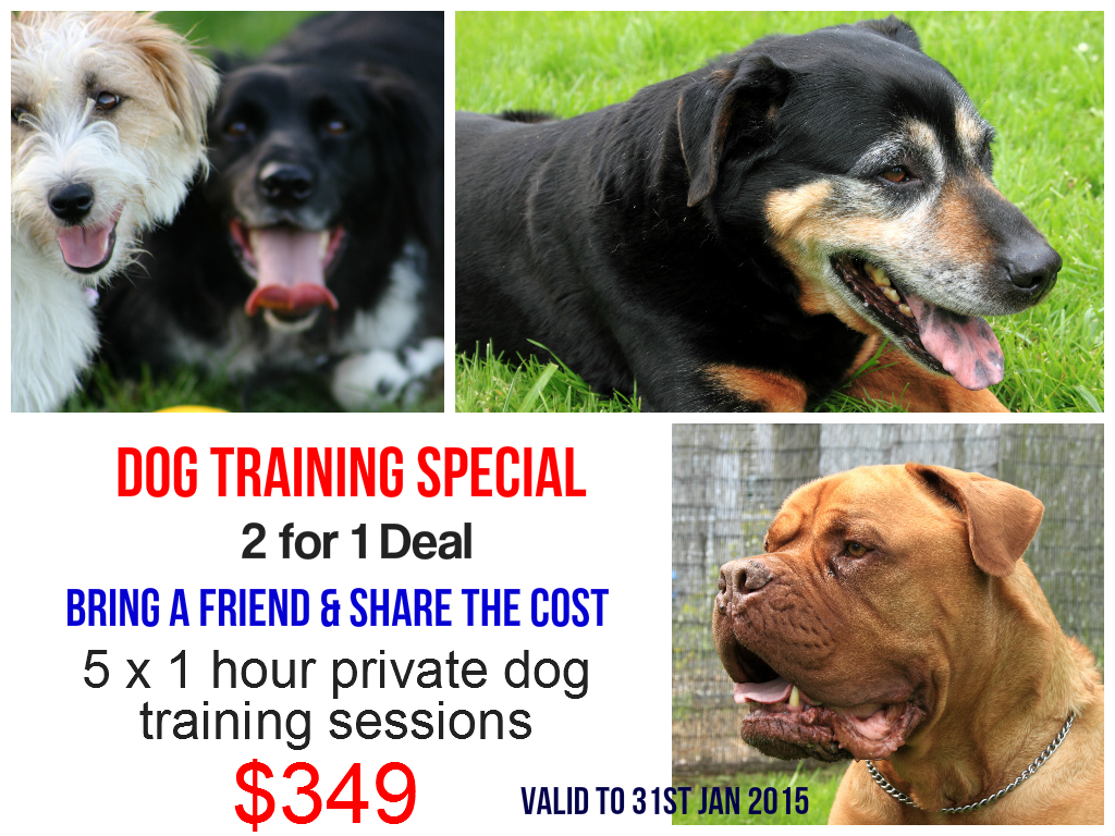 Dog Training Special: 2 for 1 deal, Bring a friend and share the
