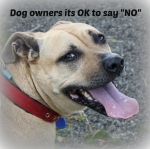 "Dog Owners, Its ok to say ""NO"""