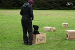 Dog Training Q & A to some frequently asked questions & queries
