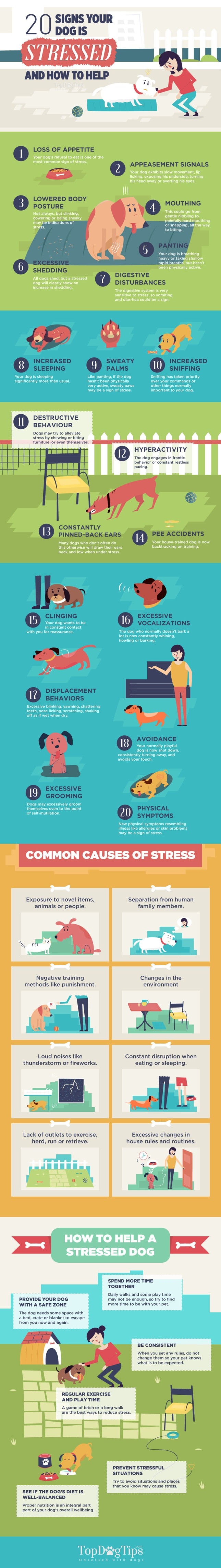 Signs-of-Stress-in-Dogs-1
